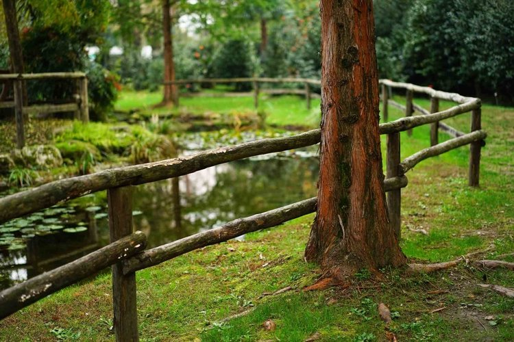 Tree trunk in a park example image 1