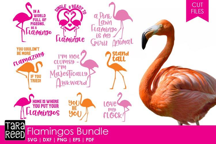 Flamingo Bundle example image 1