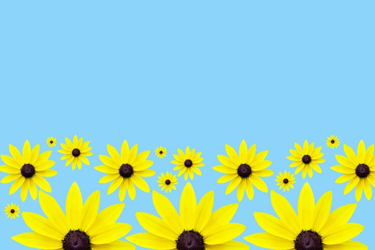 Chamomile seamless pattern, yellow chamomile on a blue backg example image 1