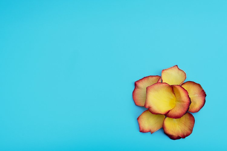 Flower made of yellow-red petals of rose example image 1