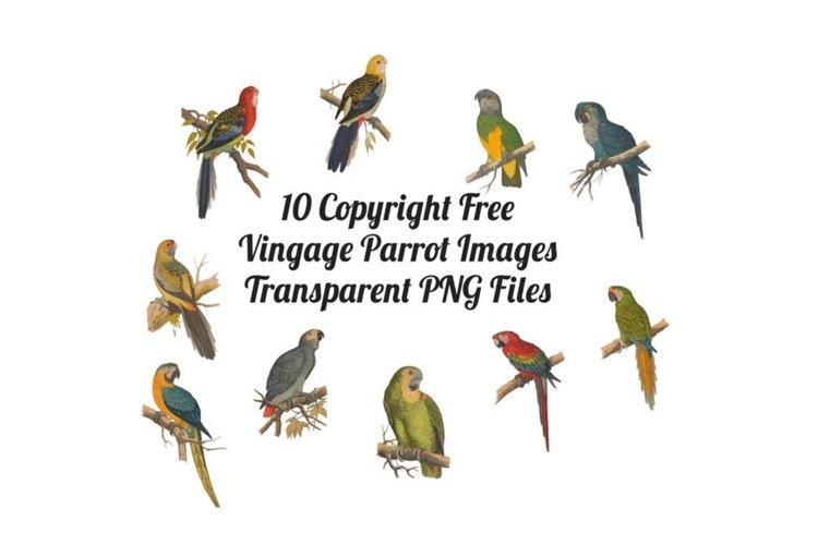10 Vintage Parrots Transparent Clipart Images example image 1