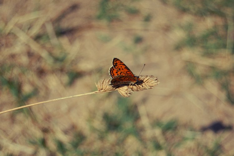 Butterfly Photography, Insect, Nature