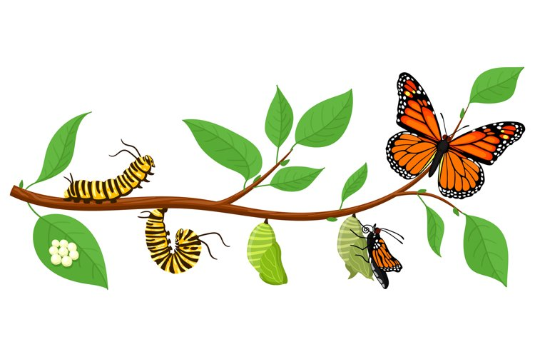 Butterfly life cycle. Cartoon caterpillar insects metamorpho example image 1