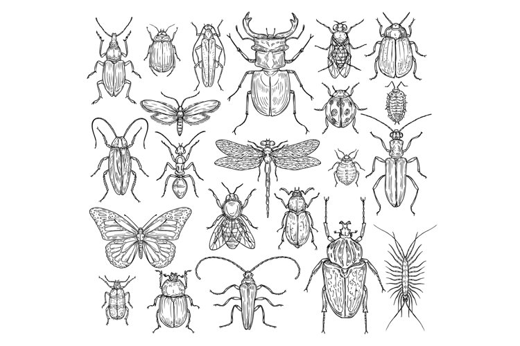 Insects hand drawn. Butterfly, beetle and fly, ant. Dragonfl example image 1