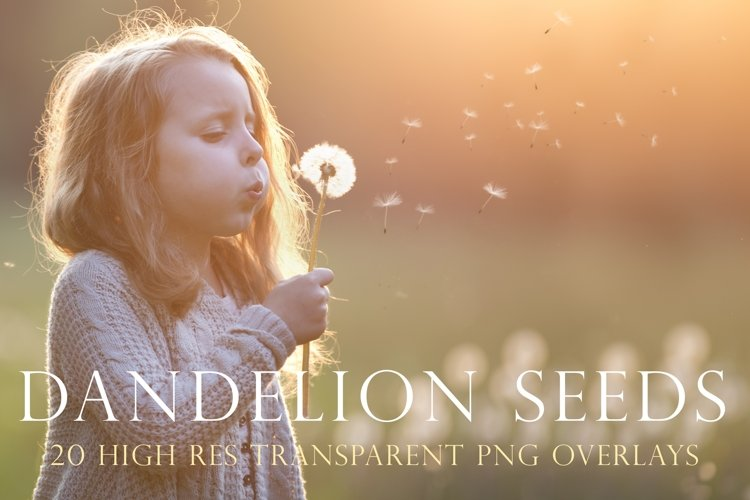 Blowing dandelion seeds photoshop overlays example image 1