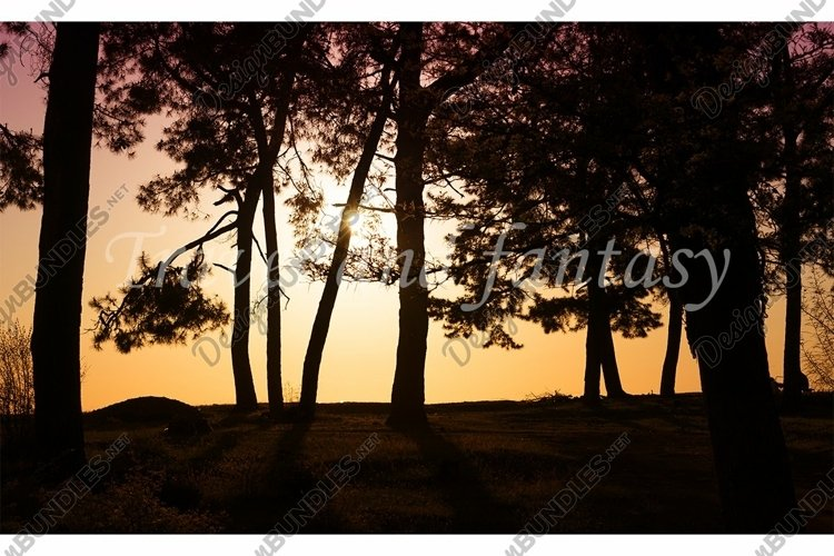 Natural landscape with silhouettes of trees
