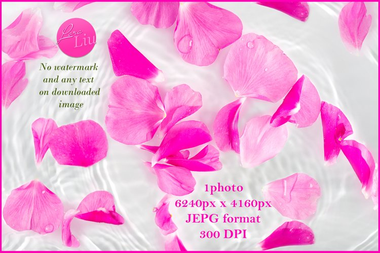Rose petals macro with drop floating on surface of water example image 1