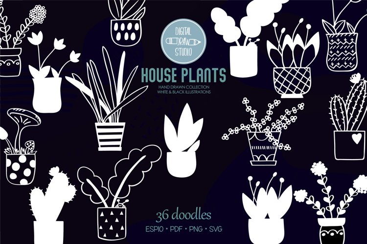 House Plants White, Cactus, Flower Pot, Hanging Indoor Plant