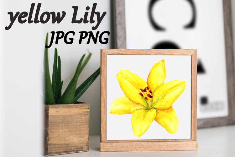 Watercolor yellow flower lilies isolated