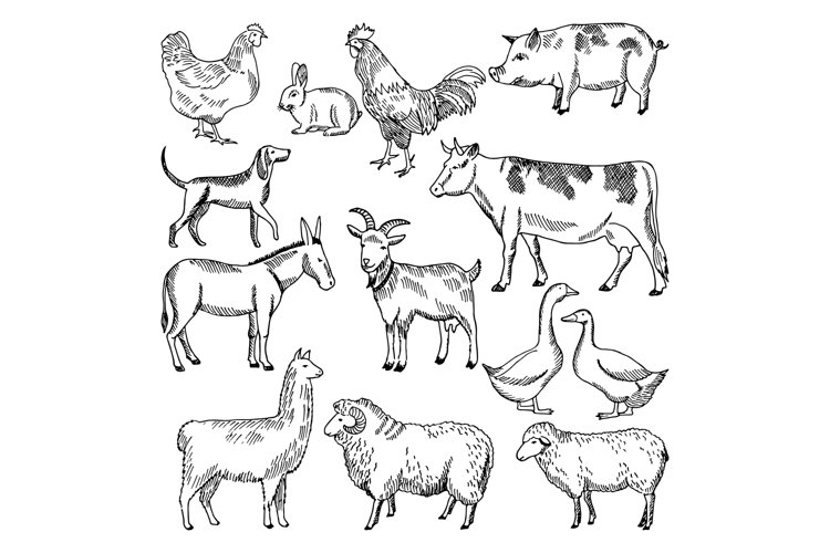 Vintage farm animals. Farming illustration in hand drawn sty example image 1