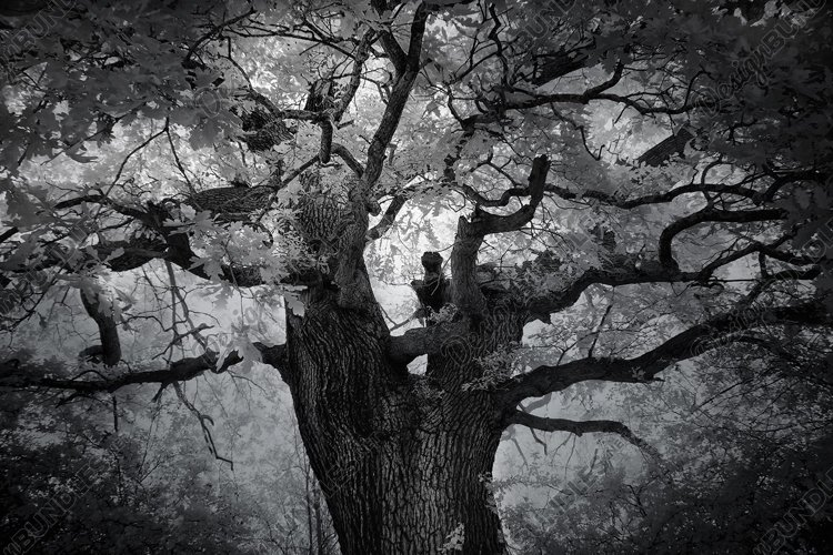 Beautiful Old Oaktree, West London, Infrared photograph example image 1