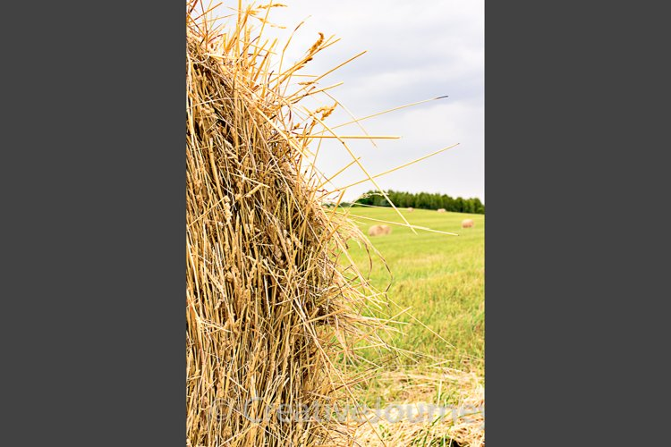 Hay bale close up example image 1