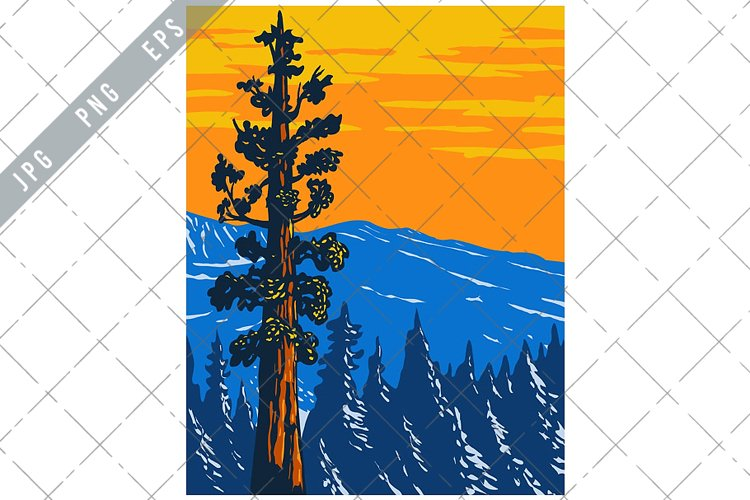 The Boole Tree Giant Sequoia in Converse Basin Grove WPA example image 1