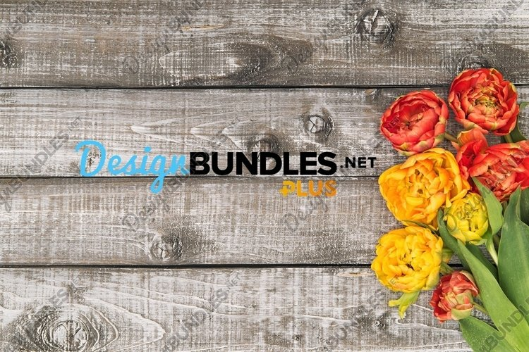 Spring tulip flowers on rustic wooden background stock photo example image 1