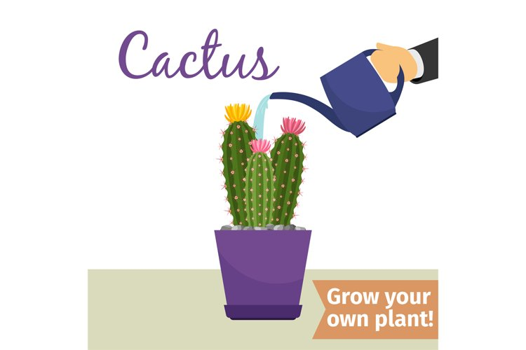 Hand watering cactus plant example image 1