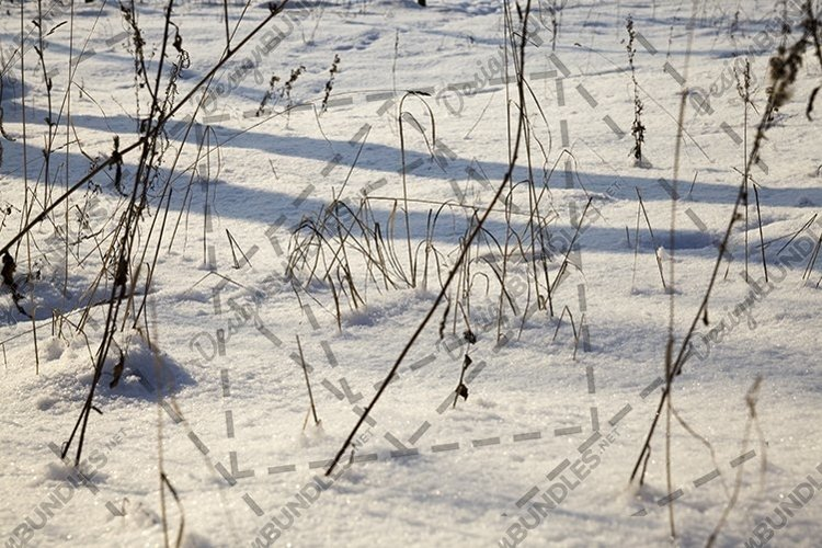 snow and ice covered grass example image 1