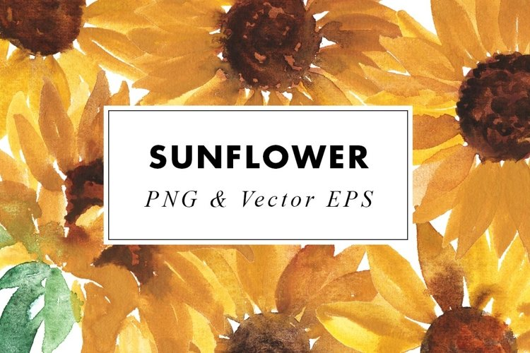 Sunflower Watercolor Clipart Vector Eps Png Drawings 846200 Illustrations Design Bundles