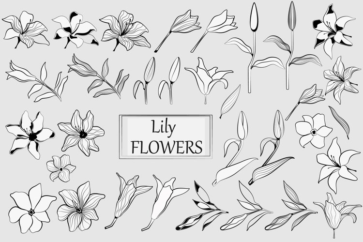 Lily flower. Line art example image 1