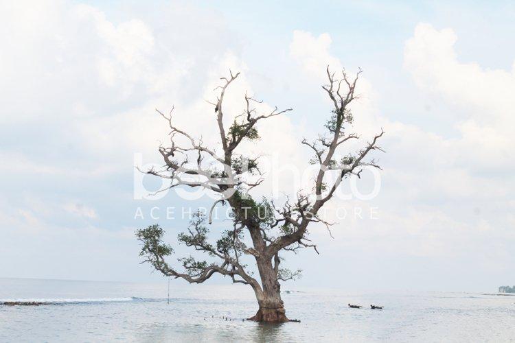 my tree example image 1