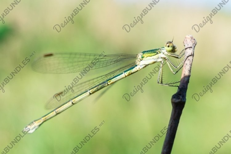 Dragonfly on a stick example image 1