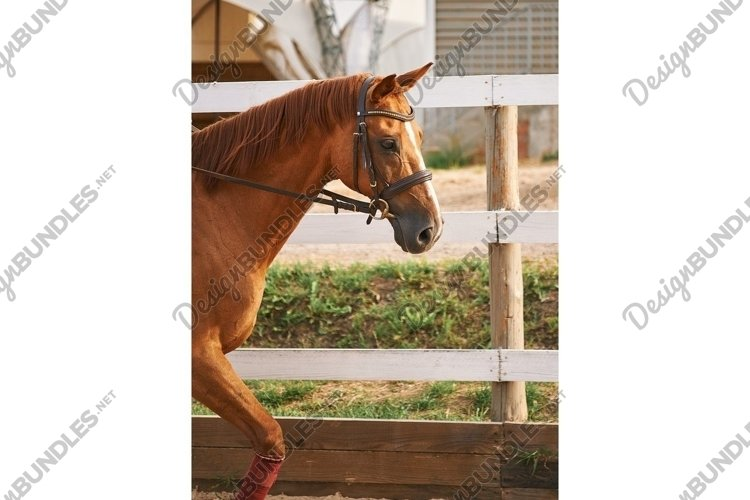 Vertical portrait of brown horse in motion on ranch example image 1