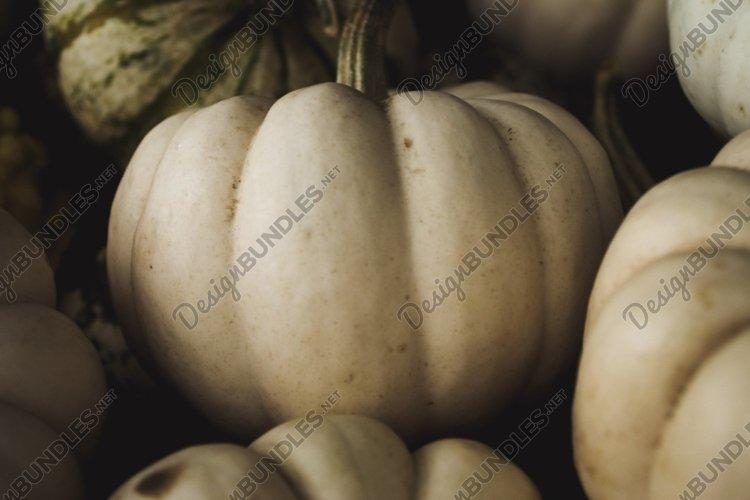 Pumpkins Stock Photo Bundle example image 1