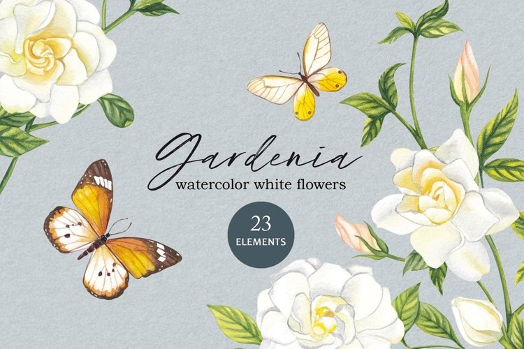Watercolour white gardenia flowers PNG.