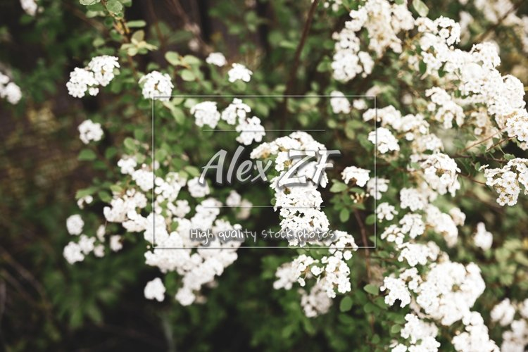White flowers on spring trees example image 1
