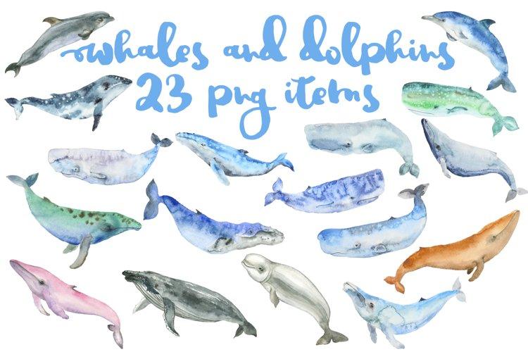 Whale watercolor big set