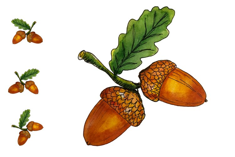 Hand drawn watercolor oak branch with acorns
