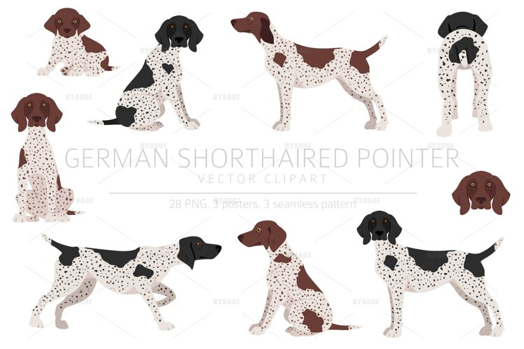 German shorthaired pointer clipart