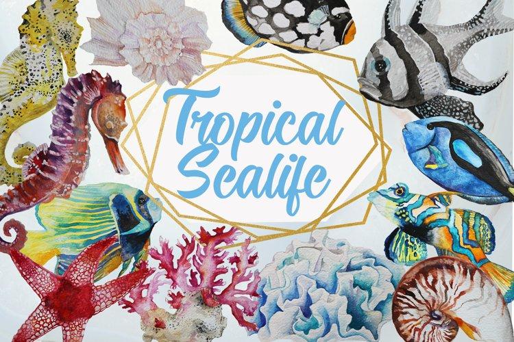 Tropical Sea Life Watercolor Clip Art