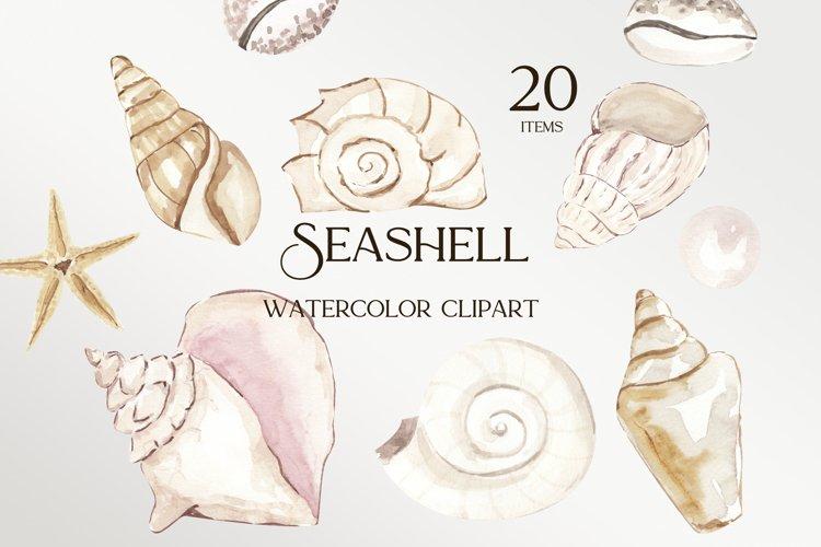 Seashell clipart, watercolor seashell sublimation