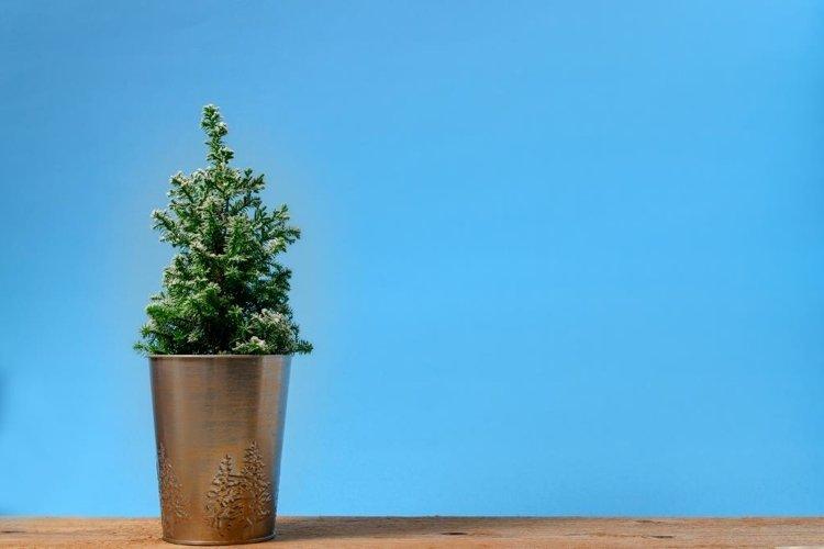 Mini Christmas tree on blue background. Minimalistic concept example image 1