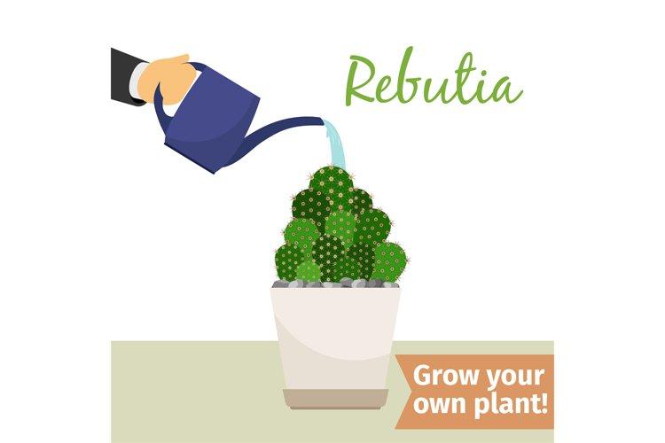 Hand watering rebutia plant example image 1