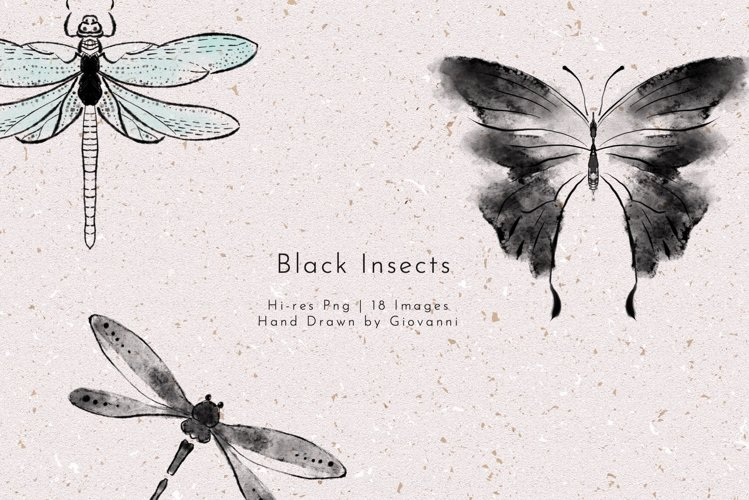 18 Black Insects PNGs, Watercolor, Fine art,
