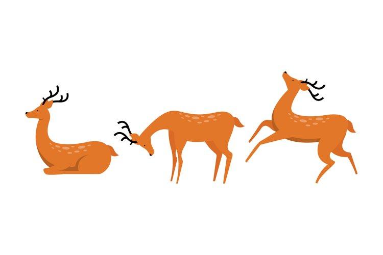 Deer Illustrations