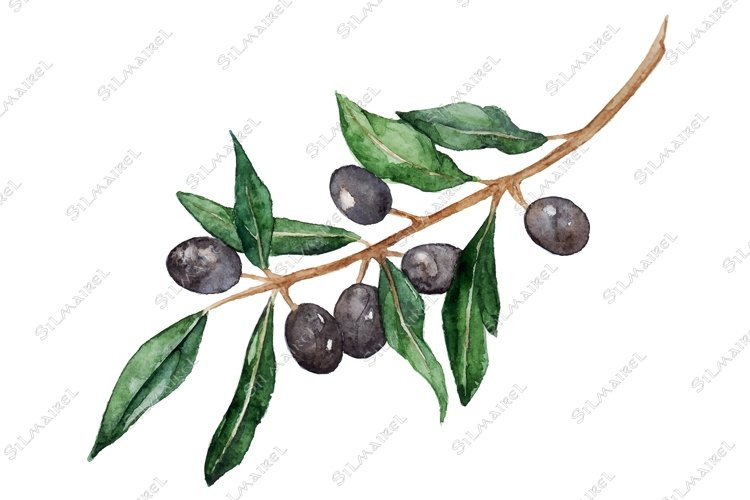 Watercolor olive oliva branch with olives isolated vector example image 1