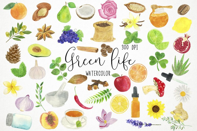 Watercolor Nature Clipart, Herbs Clipart, Health Clipart example image 1