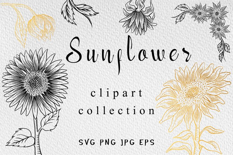 Sunflower clipart collection example image 1