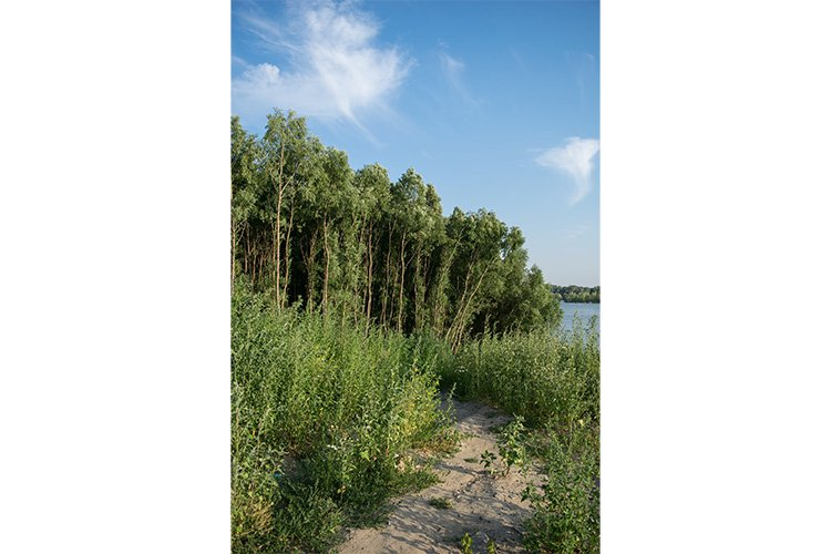 Stock Photo - river against the backdrop of the forest example image 1