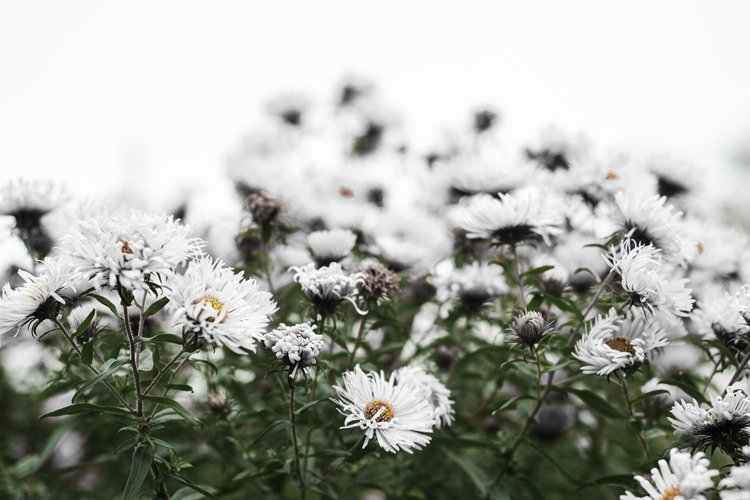 White flowers on a white background. Green grass. example image 1