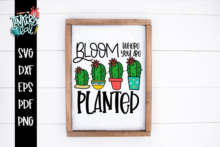 Bloom Where You Are Planted Cactus SVG example image 1