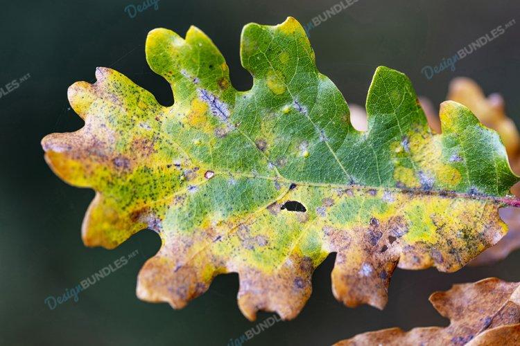 Macro Leaf example image 1