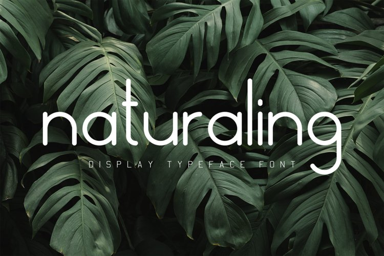 Nature Display Line Font example image 1