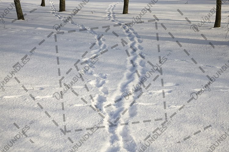 track on a winter road example image 1