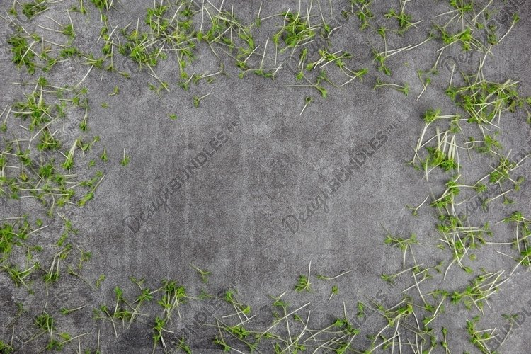 Natural gray stone, concrete background with microgreens. example image 1