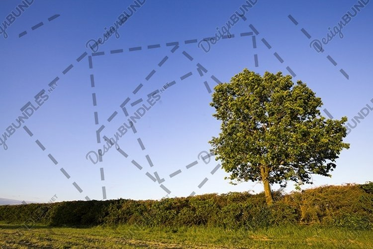 growing trees example image 1