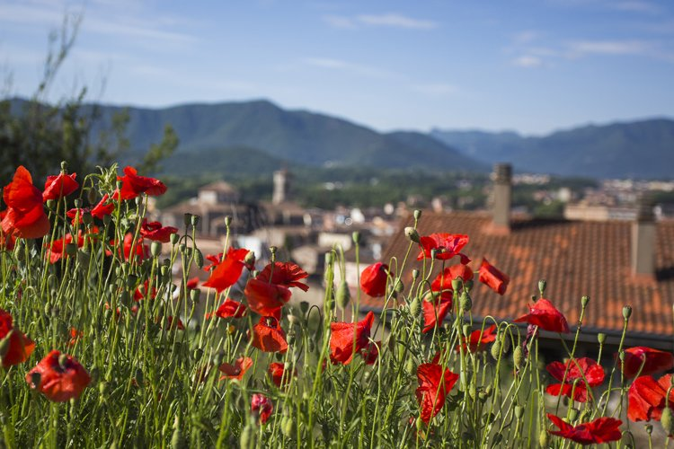 Bright colorful picturesque flowers on sunny day. example image 1