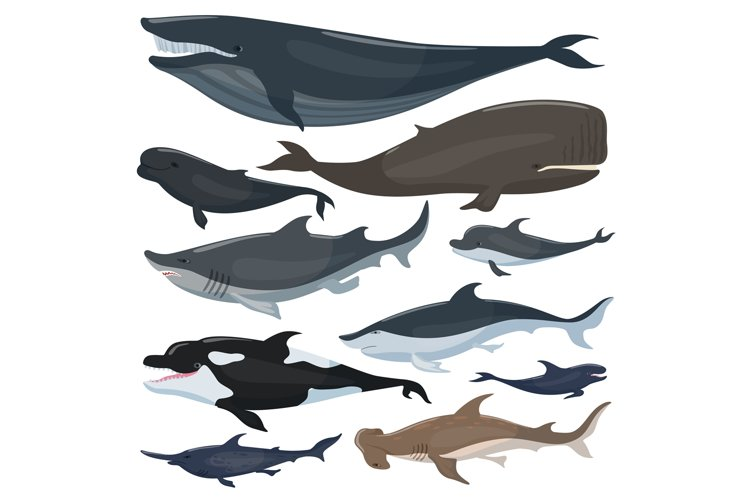 Whales, dolphins sharks and other nautical mammals animals example image 1